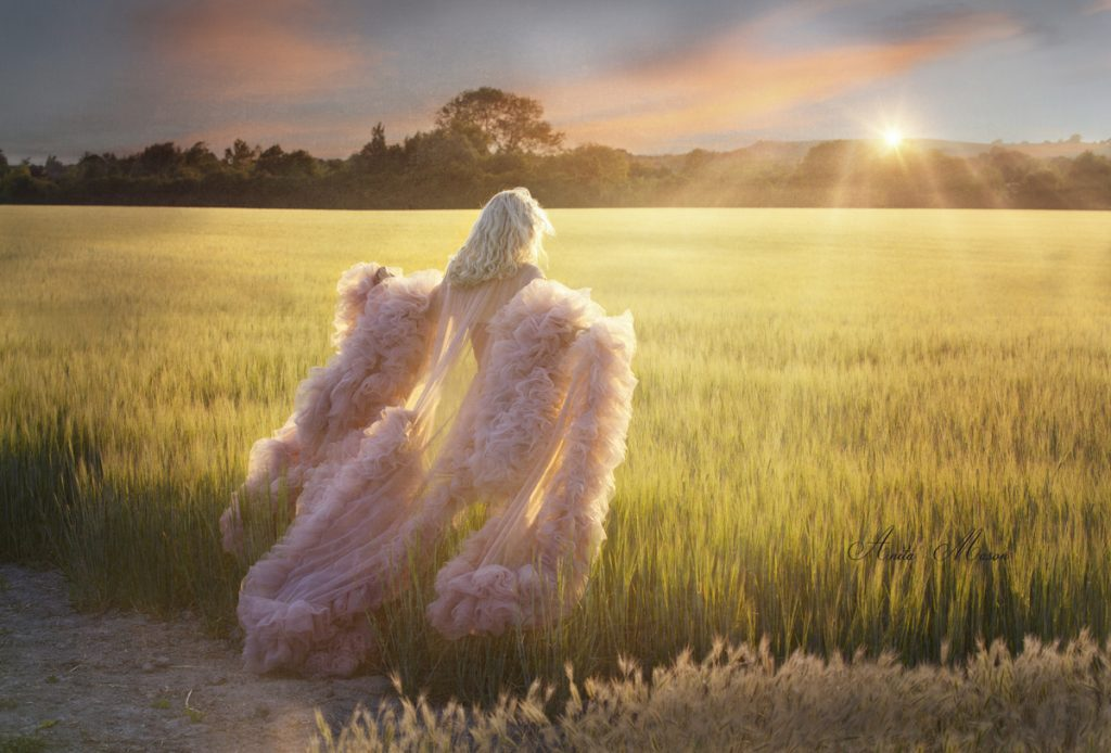 Maternity in cornfield at sunset